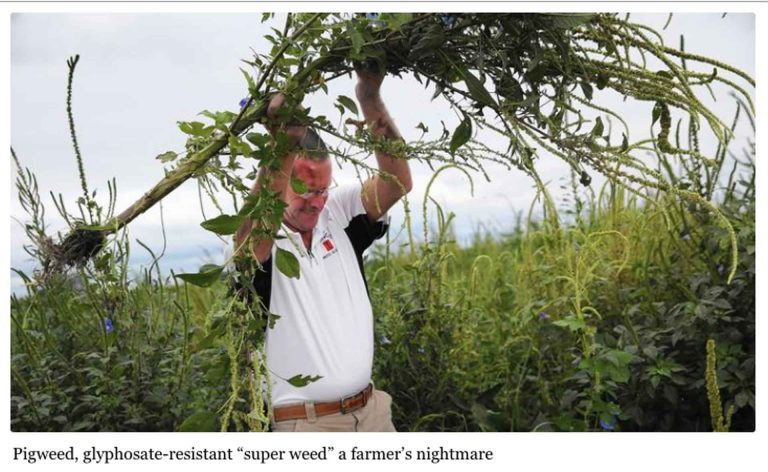 FARMERS LOSING THE SUPERWEED BATTLE
